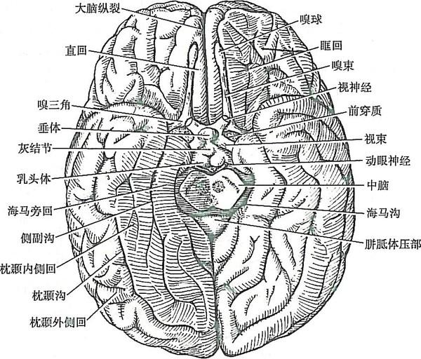 头颅解剖结构图