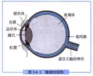 医学眼睛结构图解